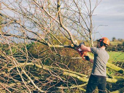 cutting_tree420x315